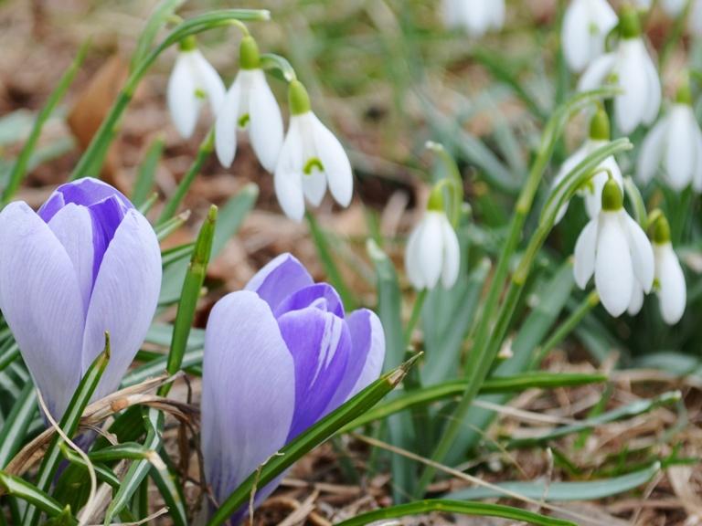 PROGNOZA METEO ANM. Vreme de primăvară la sfârşitul iernii. Se anunţă  temperaturi de 16 grade