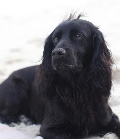 Câinele Lupo