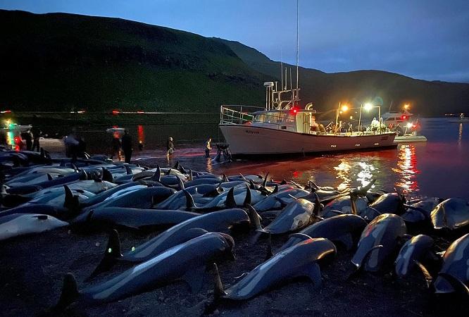 delfini uciși